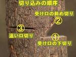 zba1-7.jpg